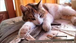 Сколько часов в сутки спят кошки? Когда кошкам не хочется спать?