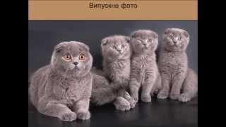 Коти-вчителі, коти-учні