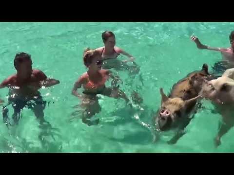 Der mit den Schweinen schwimmt/pływający ze świniami