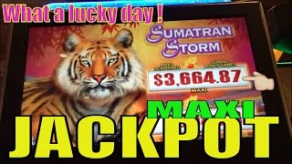 ★UNBELIEVABLE MAXI JACKPOT! HANDPAY !★☆Sumatran Storm Slot machine (igt)☆Wild Animals Day /$2.50 Bet