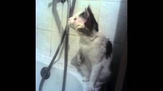 Прикольное видео, кошка в ванной