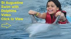 Swim with Dolphins St Augustine Beach