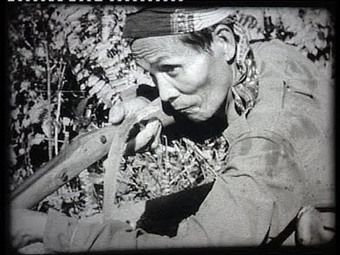 Indonesia:  Pontianak (Borneo) 1948 struggle against Japanese