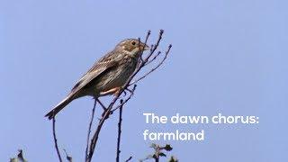 How to…Listen to the farmland dawn chorus
