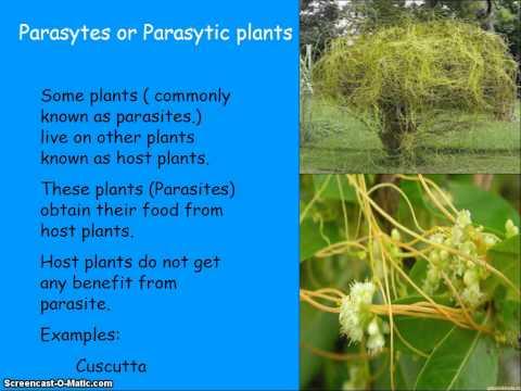 Heterotrophic nutrition in plants