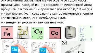 Химический состав живых организмов. Готовимся к ЕГЭ по биологии