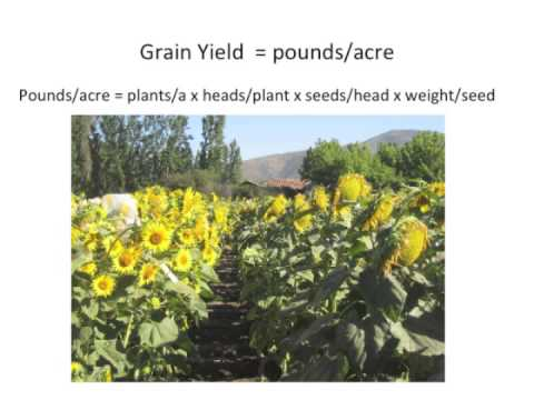 Plant Breeding for Organic and Local Agriculture