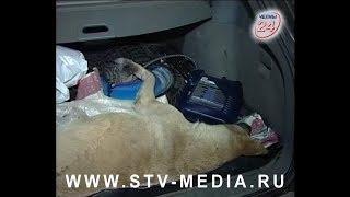 В Челнах усыпили ощенившуюся собаку