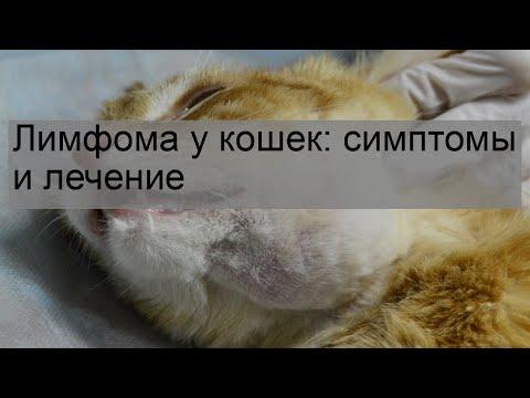 Вопрос: Какие есть методы лечения гиперпаратиреоза у кошек?