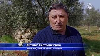 Истрию признали регионом, где производят лучшее оливковое масло (новости)