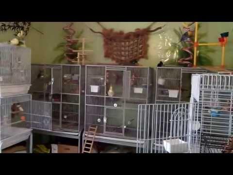 A Tour of my Bird Room May 2013