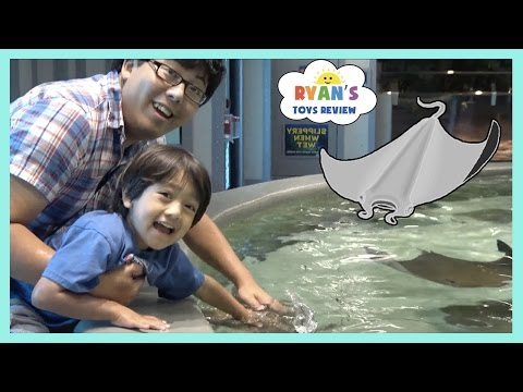 Stingray Feeding for Kids at the Aquarium Family Fun activities for Children and Toddlers Kids Video