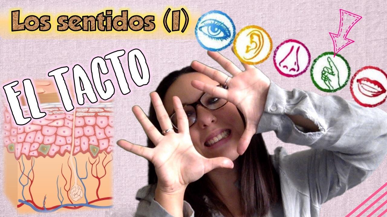 Los sentidos (I). Los receptores sensoriales. EL TACTO. Bio[ESO]sfera - Biología