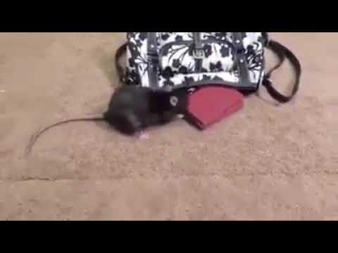 Naseer :video com.(6)