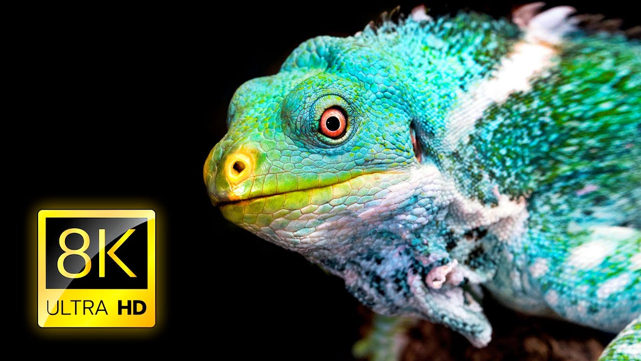 Amazing Reptile Collection 8K ULTRA HD / 8K TV