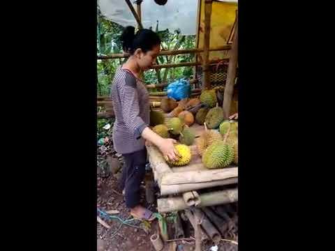 Lg viral cewek cantik penjual durian #lolong#ikrom #pekalongan city
