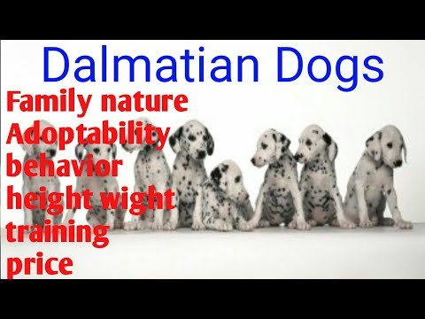 Know about breed | know about Dalmatian dog Breed | Dalmatia dogs full information| Life dogs|