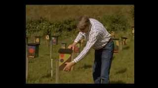 пчеловодство в германии видео
