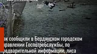 Под Бердянском бешеная лиса напала на домашних животных и птиц