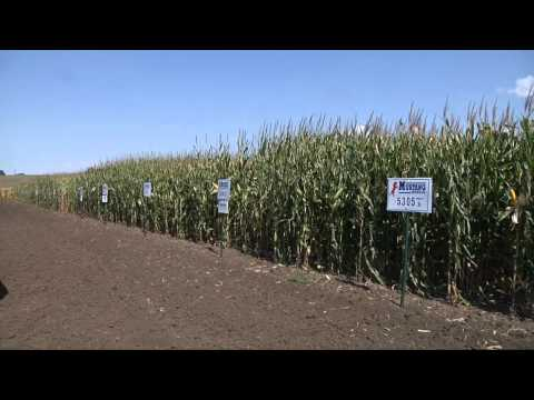 Seed Companies Planting Future Technology