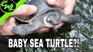 pet-sea-turtle