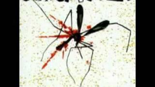 Toxoplasma- Leben Verboten