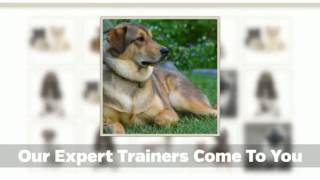 Home Dog Training Calgary - Furry Logic
