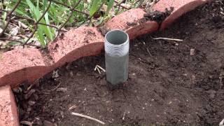 Hops Trellis For A Home Garden