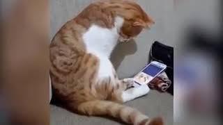 Кот смотрит видео погибшего своего хозяина в телефоне, он умер когда то