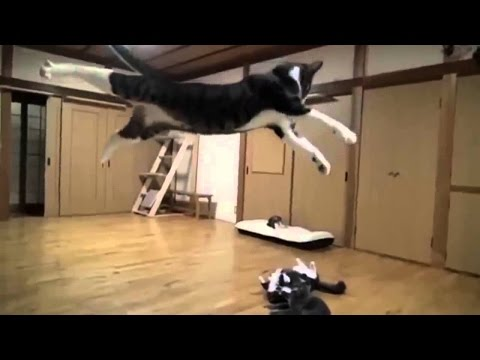 Cats fighting & funny moments - funny cats and dogs compilation