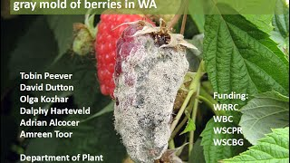 Fungicide Resistance of Botrytis Affecting Small Fruit PNW, Tobin Peever, WSU