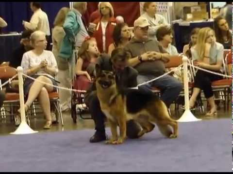houston world series of dog shows