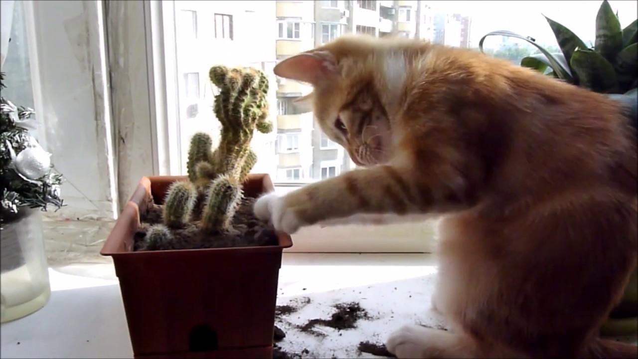 коты и цветы - Страница 2 Maxresdefault