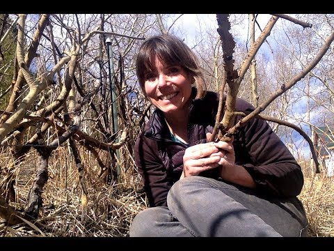 Building a Natural Fence from Branches, Logs and Twigs
