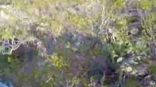 Atrapando a la vibora de Cascabel
