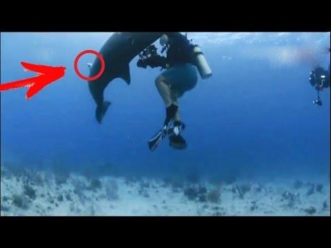 Вопрос: Нападают ли дельфины на людей?