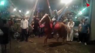 فيديو| طفلة ترقص بالحصان في مولد السيد البدوي