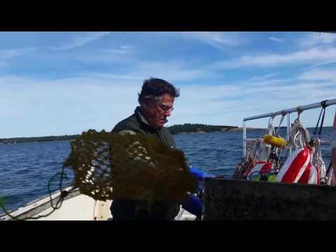 AVA 08 09 2016 Maine Fishing Trip p2