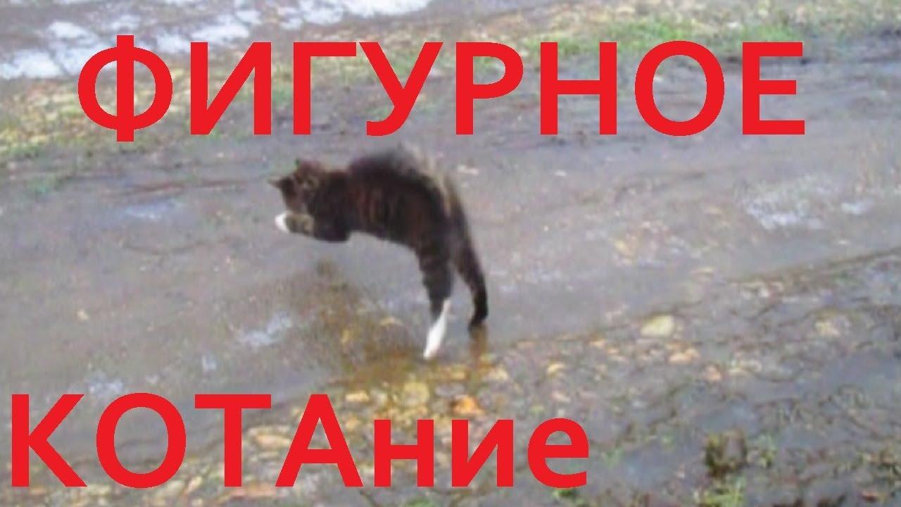 Кот и лёд, фигурное КОТание, смешной кот, котик, кошка ...