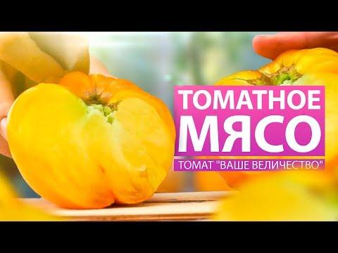 МЯСИСТЫЙ. КРУПНЫЙ. ОЧЕНЬ ВКУСНЫЙ. ТОМАТ ВАШЕ ВЕЛИЧЕСТВО (обзор сортов) | величество | огороде | томаты | семена | отзывы | огород | желтые | томат | отзыв | алтая