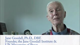 Message de Dr. Jane Goodall : Journée Internationale de la Paix et COP21