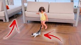 القطط هاجموا ميلا و خرمشوها😰🐈 BABY VS. CATS