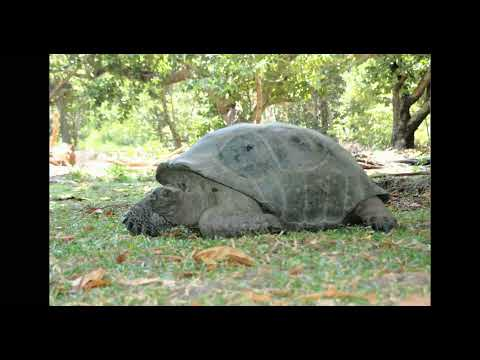 First video evidence of tortoises hunting birds / Curr. Biol., Aug. 23, 2021 (Vol. 31, Issue 16)