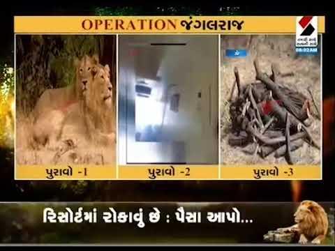 Evidence Of Sandesh News 'Operation Jungleraj' ॥ Sandesh News
