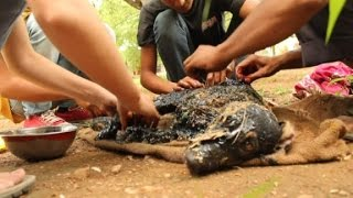Dog found covered in tar recovers
