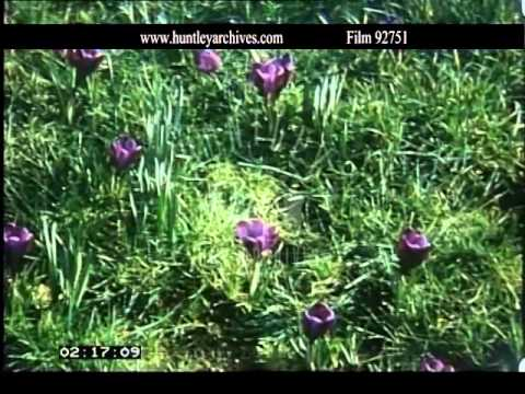 Early Spring Flowers In The U K Archive Film 92751 Youtube