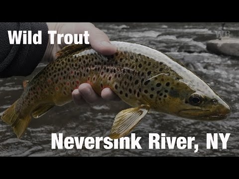 WB - Fly Fishing Wild Trout, Neversink River, NY - April '17