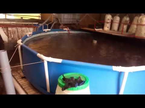 Разведение рыб в домашних условиях на продажу