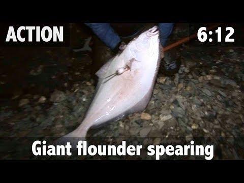 Giant Flounder Spearing!