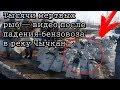 Тысячи мертвых рыб — видео после падения бензовоза в реку Чычкан